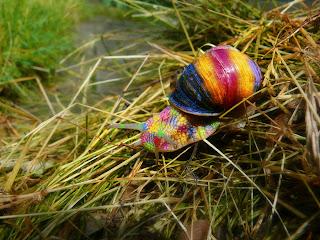 tęczowy ślimak