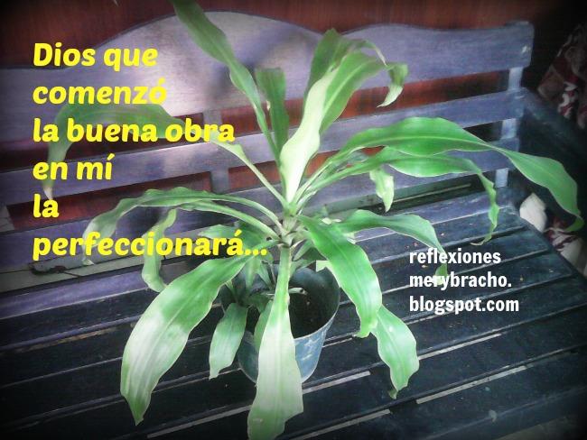 Quiero ser feliz y crecer al máximo integralmente. Reflexiones cortas para ti de Mery Bracho. Comparación plantas en macetas y en tierra. Ser feliz.