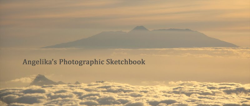 Angelika's Photographic Sketchbook