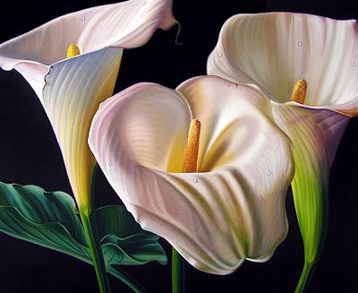 fotos gratis de flores calas de colores cartuchos free  - Fotos De Flores Cartuchos