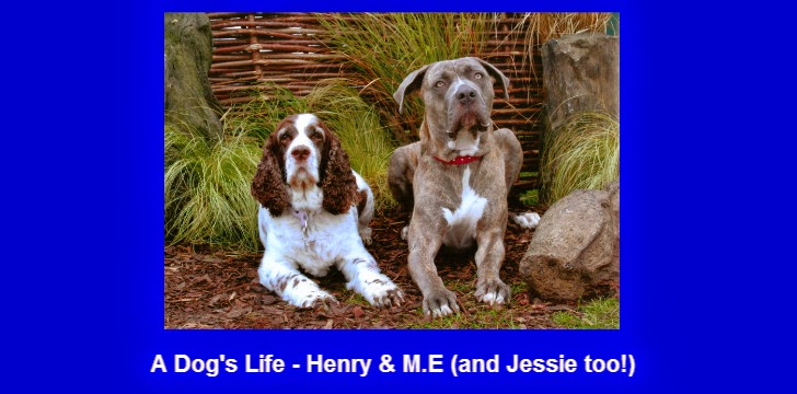 A Dog's Life - Henry and M.E