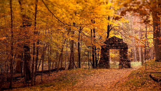 Artistic Forest Wallpaper HD