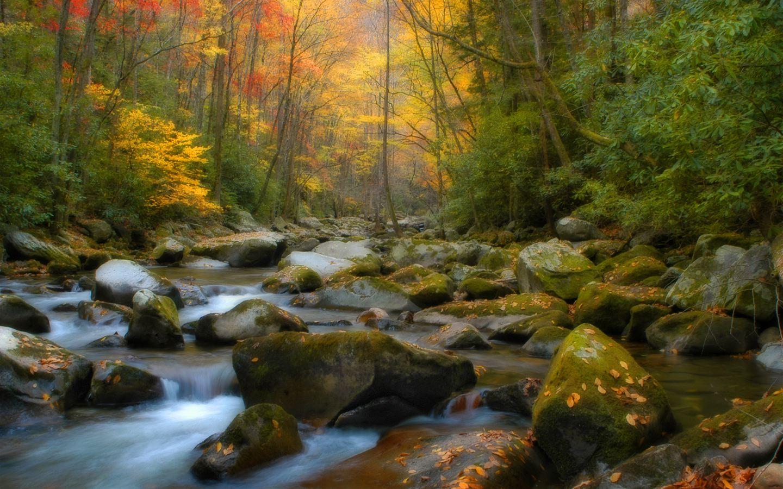 1440x900+wallpaper+nature