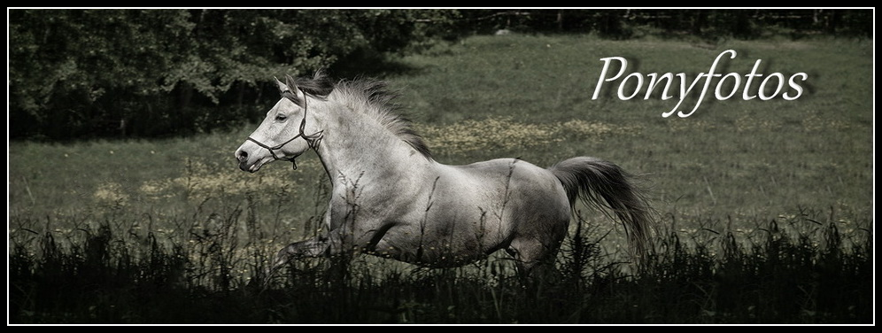 Ponyfotos