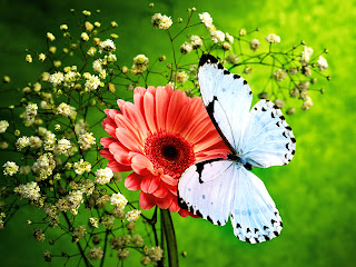 Pink Flower and Beautiful Blue Butterfly