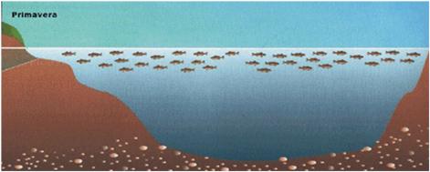 Blog del pescatore periodi di pesca alla trota in lago for Sistema di filtraggio per laghetto