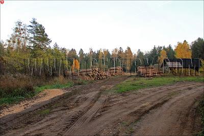 Заброшенный хутор Борки