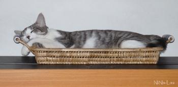 Miss' Cat