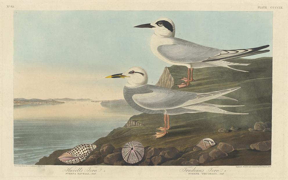 Art Amp Artists Audubon Birds Of America Part 4