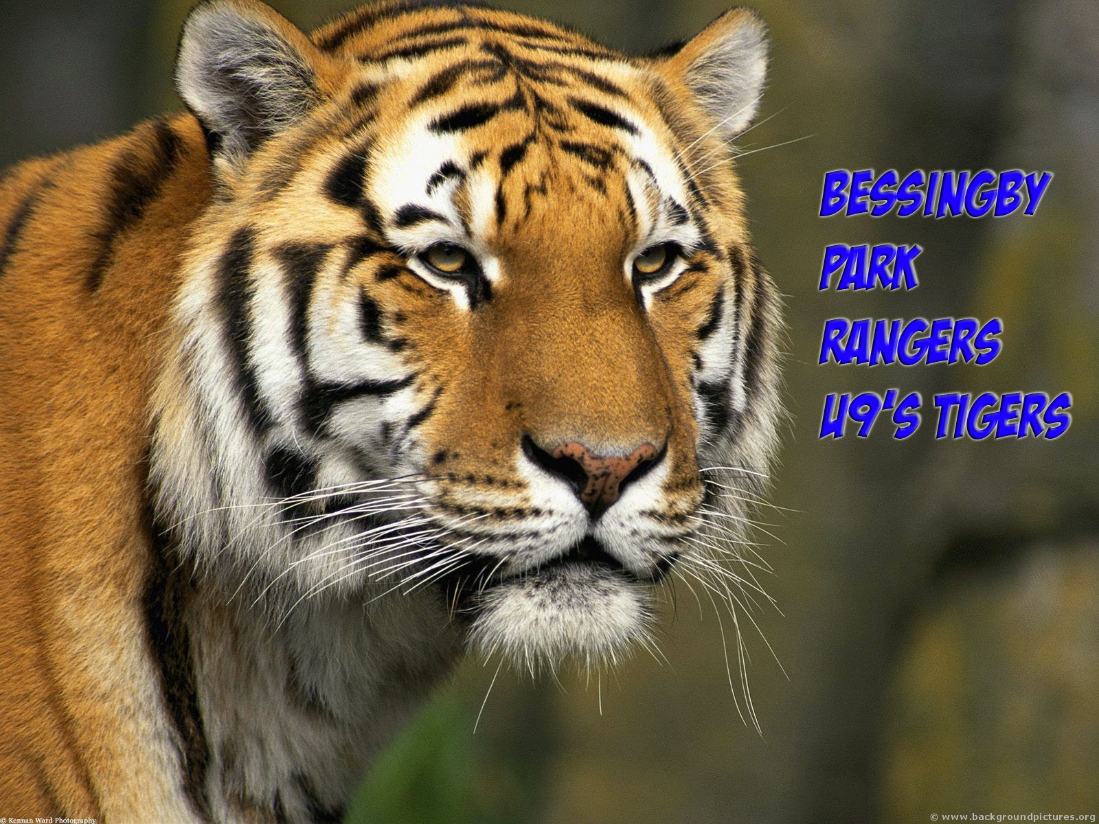 BPR U9 Tigers