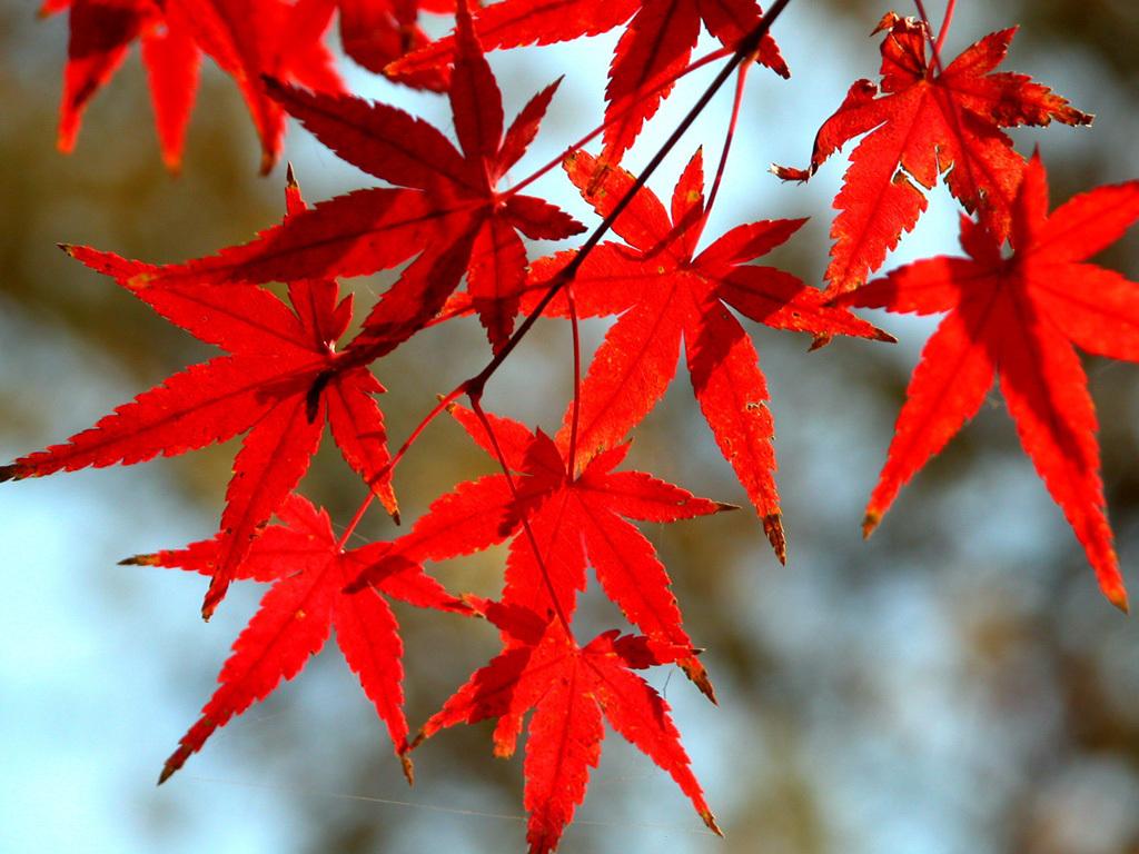 http://2.bp.blogspot.com/-c4nwOL5cTlM/TnU-PzGvQII/AAAAAAAAAuQ/ZwvNMB8rFRY/s1600/Autumn-wallpaper-autumn-9444943-1024-768.jpg