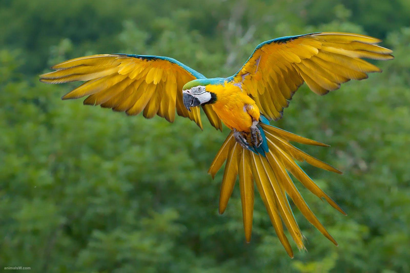 http://2.bp.blogspot.com/-c4on0RB2xeA/TZgNlhyqzvI/AAAAAAAAIEQ/QfoGNtOH_Fg/s1600/bird_wallpaper_desktop_wallpapers_Blue%20and%20Yellow%20Macaw%20Birds-wallpaper.jpeg