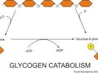 Pengertian Katabolisme