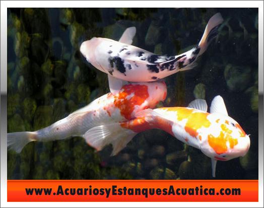 Tutoriales consejos acuarios y estanques acuatica cuidado for Cuidado de peces