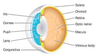 Kenali Bagian-Bagian Mata dan Fungsinya
