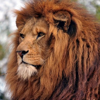 Mike Corthell What Does The Lion Of Judah Represent