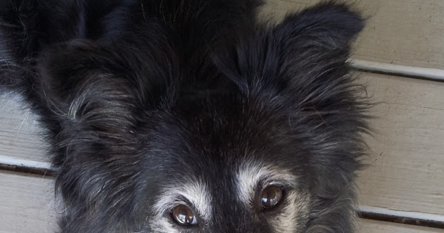 Image Result For Ultimate Dog Training