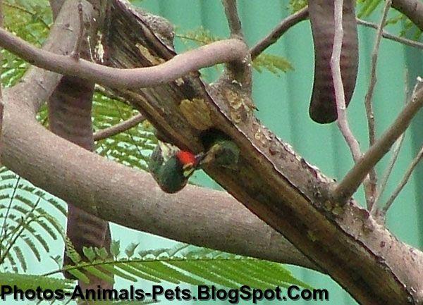 http://2.bp.blogspot.com/-c5YcBmMU6wc/Tet3iOwo1wI/AAAAAAAABP4/HC4KNRejVK8/s1600/woodpeckers_0003.JPG