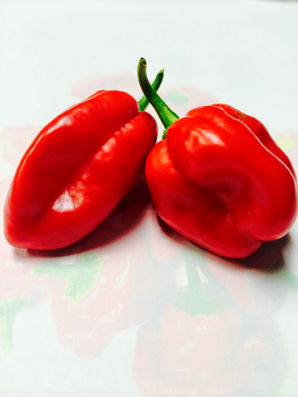 Hydroponic Pioneer Worlds Hottest Peppers Omg