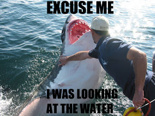 excuse me i was looking at the water shark, animals funny pictures, animal funny pictures