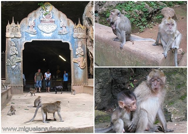 Macacos-Wat-Suwan-Kuha