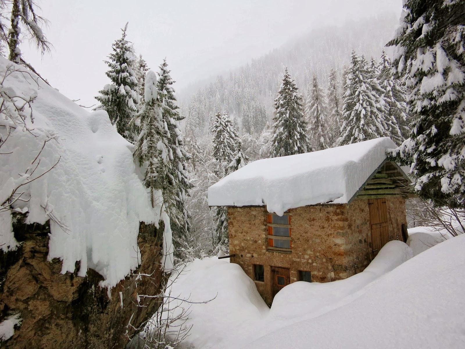Capre nel bosco inverno for Cattura per capre