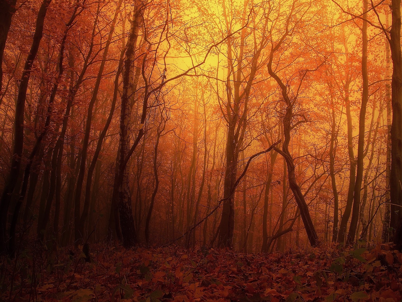 orange forest hd wallpapers ~ hyip bitz - hyip investment monitor