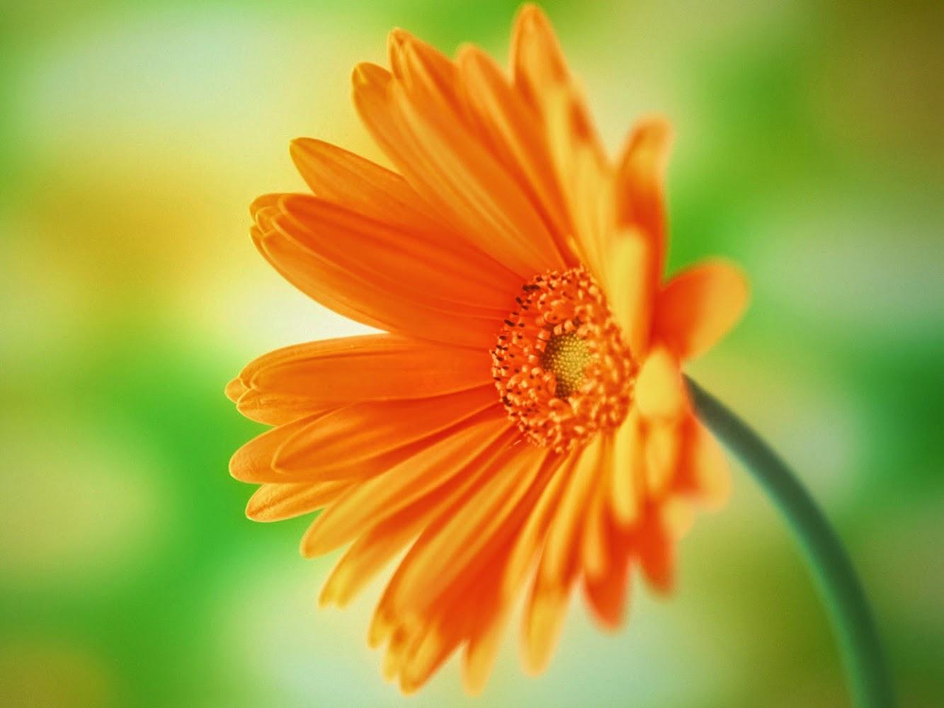 Flowers Desktop Wallpaper Background Beautiful