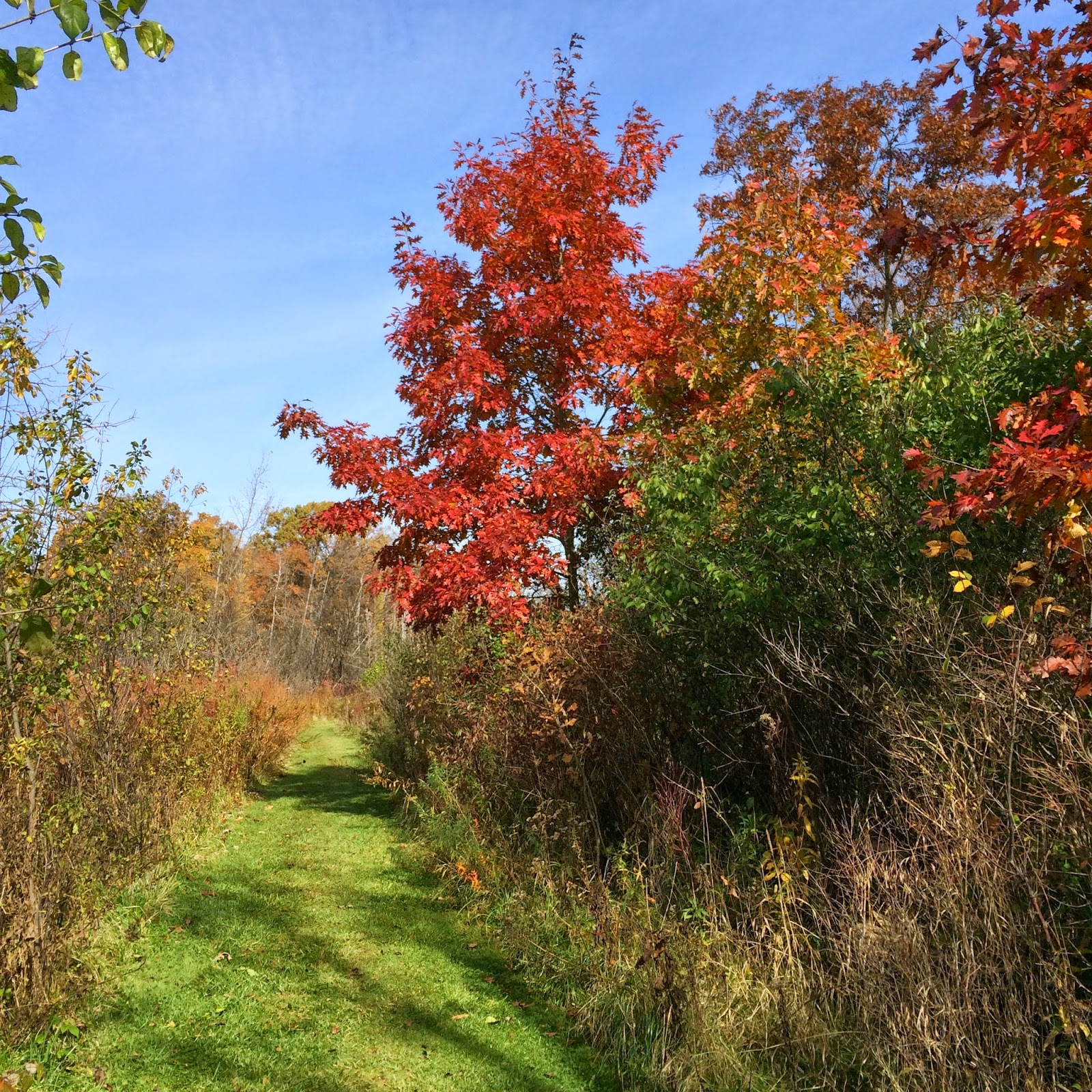 Retired in Ann Arbor: Matthaei Botanical Gardens footpaths
