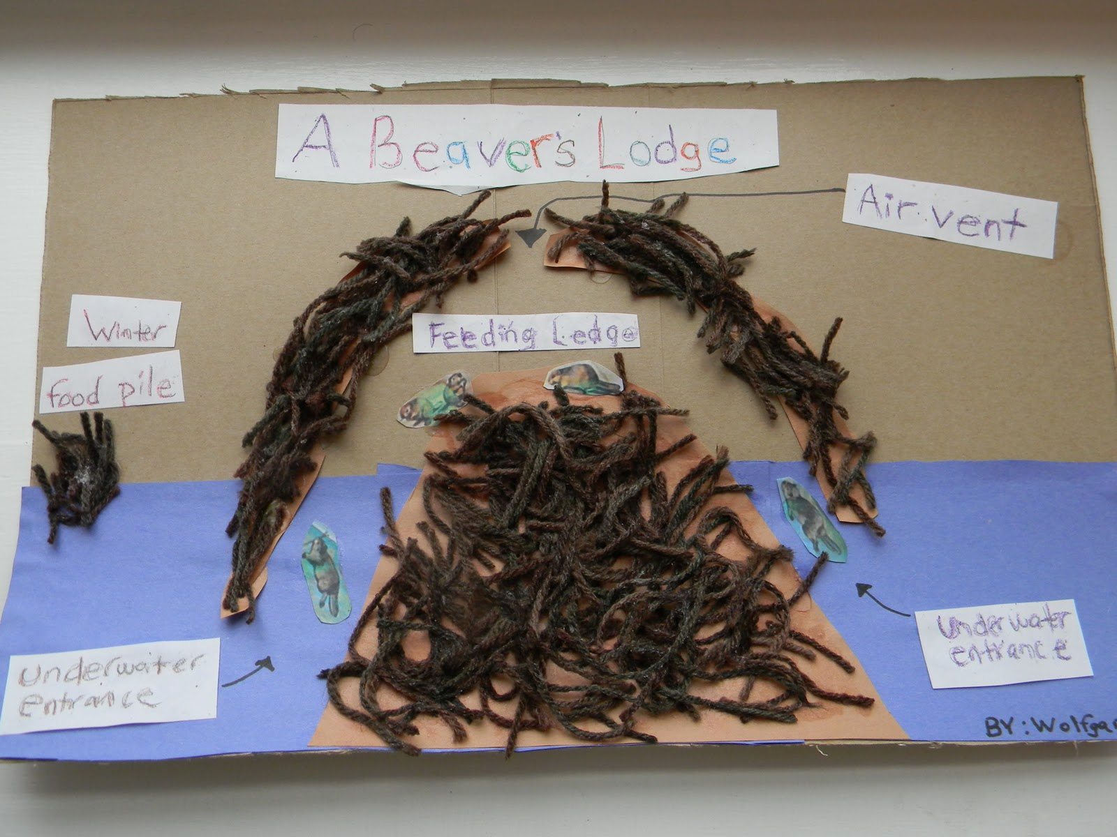 Beaver lodge diagram - photo#2