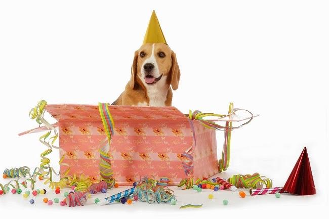 Pies prezentem na święta