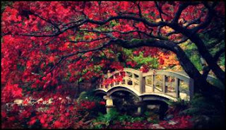 pokok-tercantik-dunia