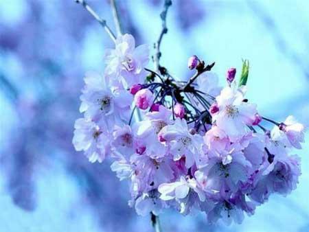 أجلــــي عن ناظريك الغبار بنظرة على الازهار.