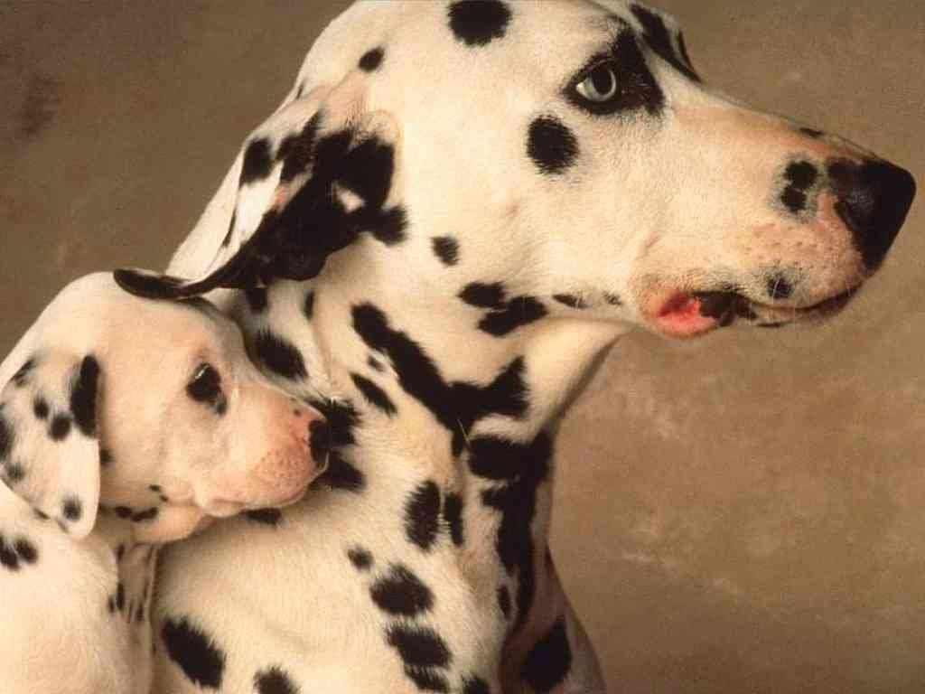 http://2.bp.blogspot.com/-c87iWKe1wSs/Tb5_MEotFMI/AAAAAAAAIm0/WkuWMN32aig/s1600/41020-th-puppie-wallpaper.jpg