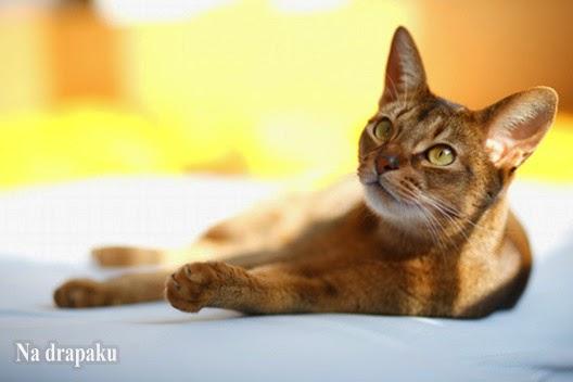 Co zrobić, gdy sierść kota jest w złym stanie?