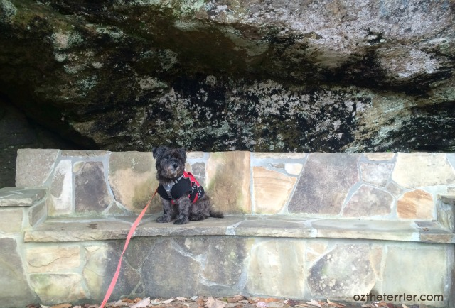 Oz the Terrier rests in a small cave on the South Rim Trail at Tallulah Gorge State Park, Georgia