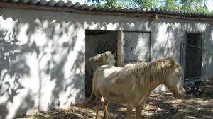 Công dụng của cao ngựa bạch