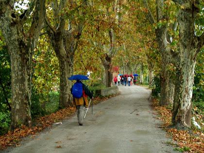 El passeig arbrat de Can Avel·lí