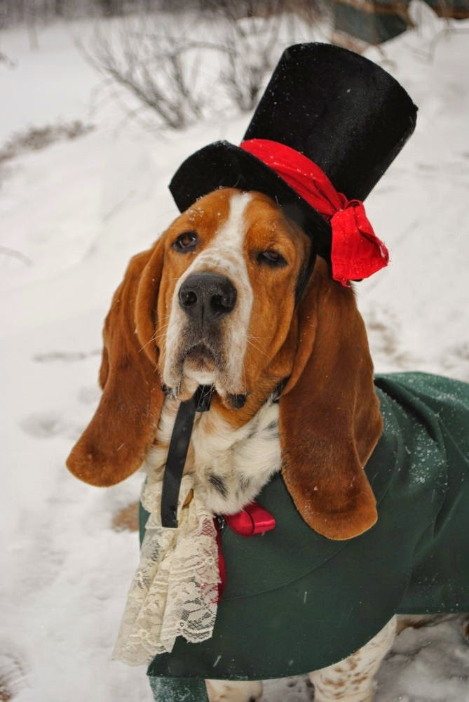 Christmas Caroler Dog Cat Pet Costume Hat by MattiOnline on Etsy CUSTOM Hat only.