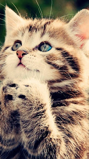 Cute Praying Kitty Free iPhone 5 bg