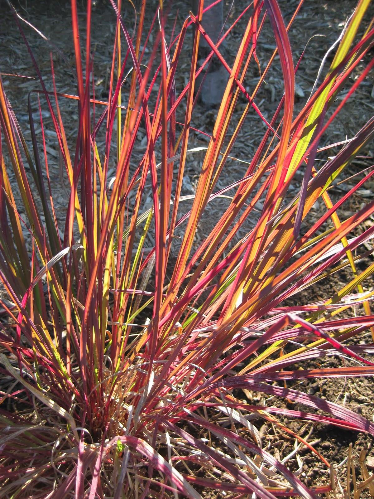 Rotary Botanical Garde...
