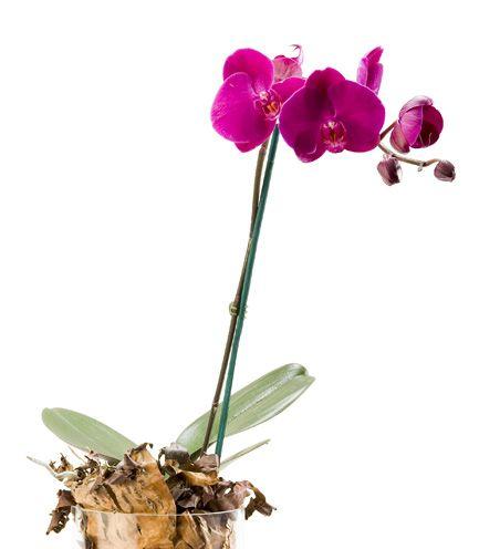 Las 10 plantas perennes más fáciles de crecer de la semilla | Dengarden