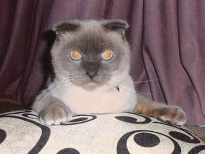 kucing dipilih sebagai datuk bandar