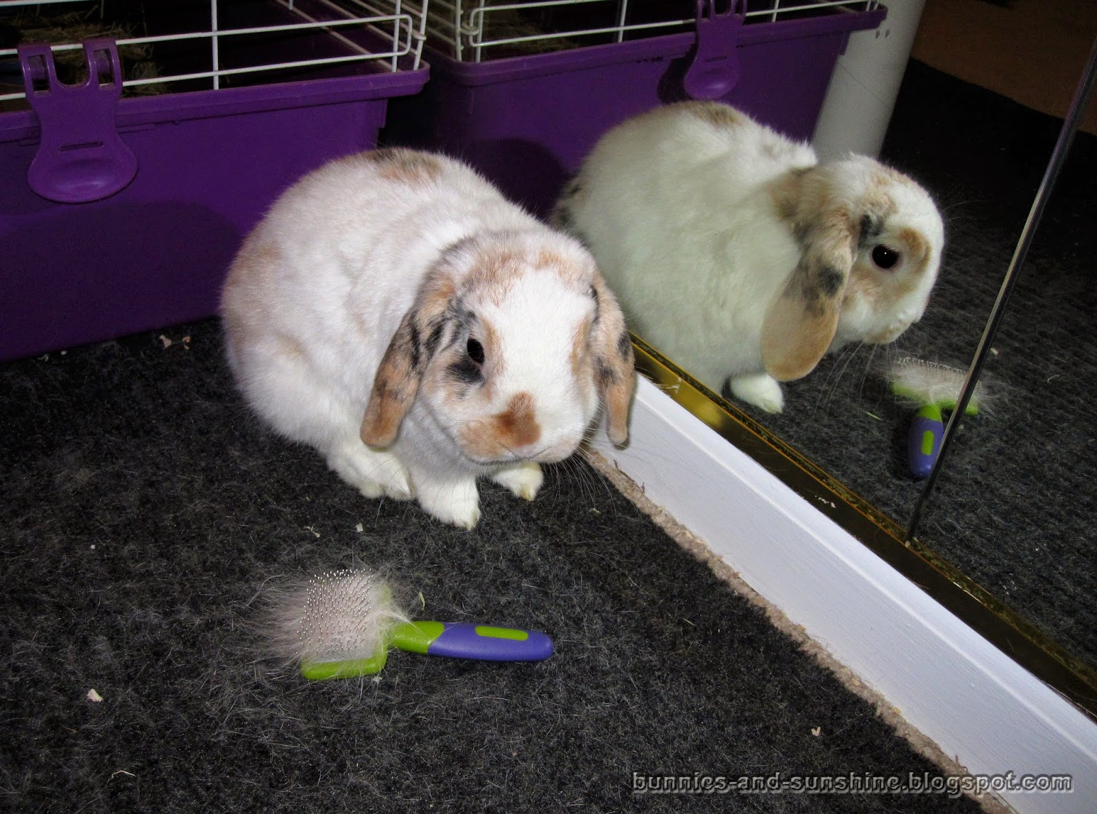 bunnies and sunshine fluffiest bunny snuggle ever