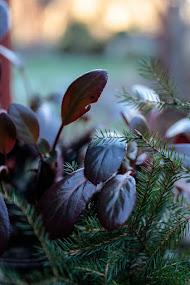 Bergenians blad är så härligt röda