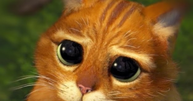 Miaupl Zobacz Wątek Moje Koty Xix Druid