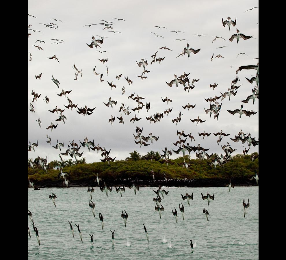 عجائب الطبيعة جولة داخل غالاباغوس