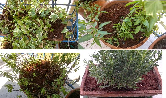 Recensione terriccio universale e vasi in fibra di cocco for Acquisto piante peperoncino