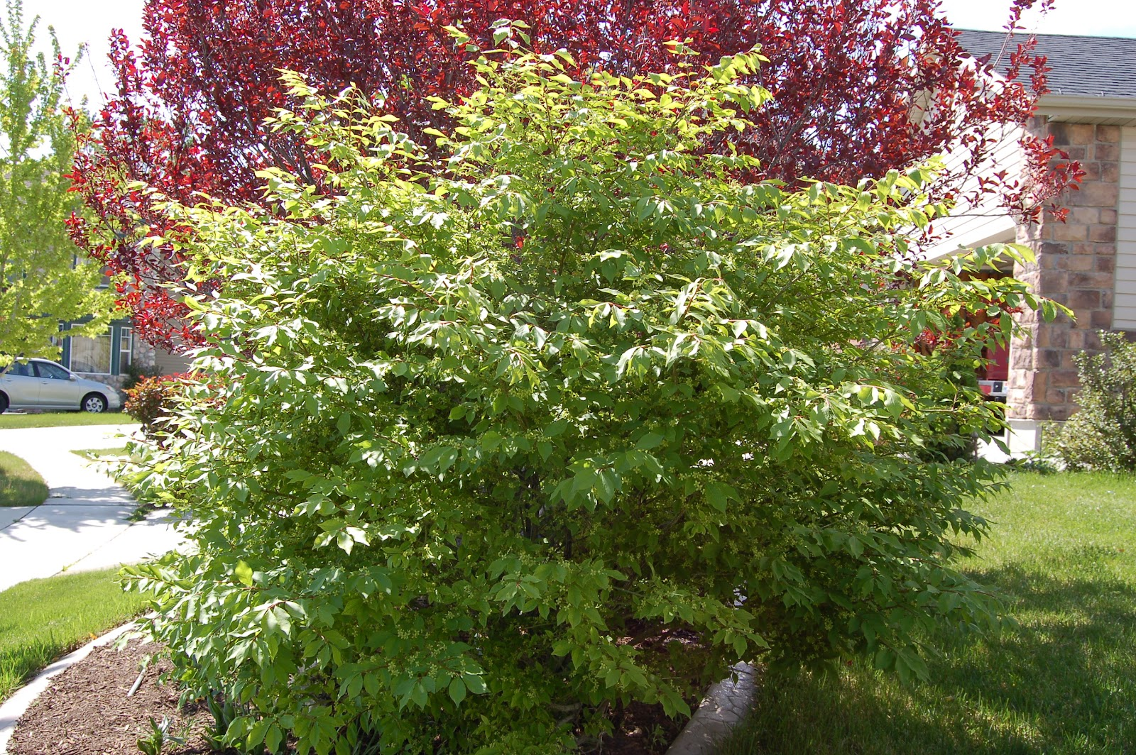 Growing Plants And Trees In Eagle Mountain Saratoga Springs And