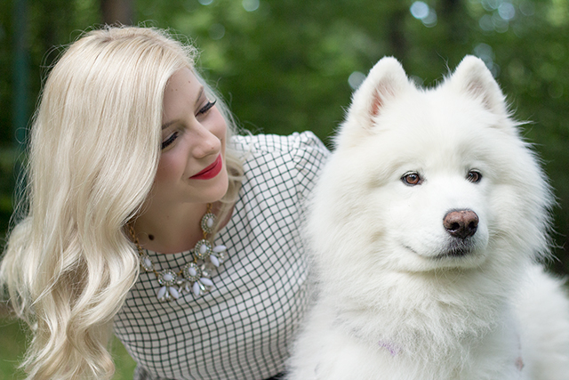"Blogger dogs - Pretty Little Details' Samoyed puppy ""Nova""."
